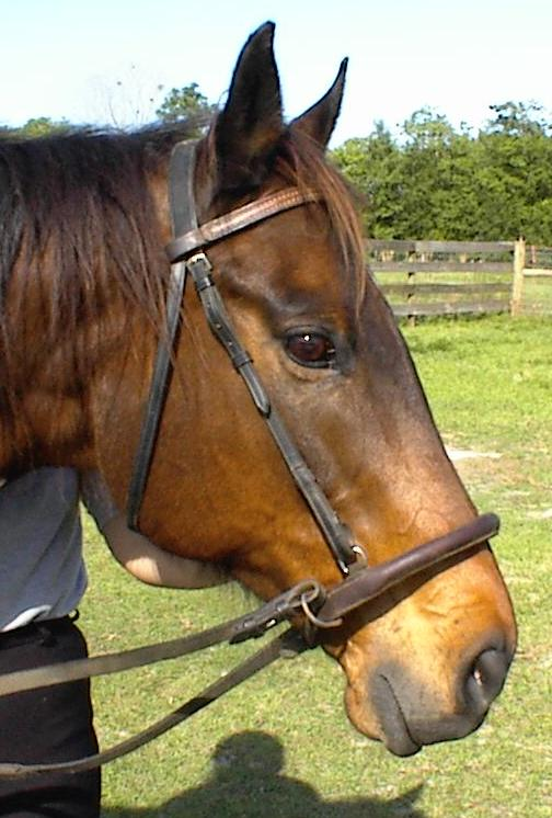 Double Bridle Vs Regular Bridle The Horse Forum